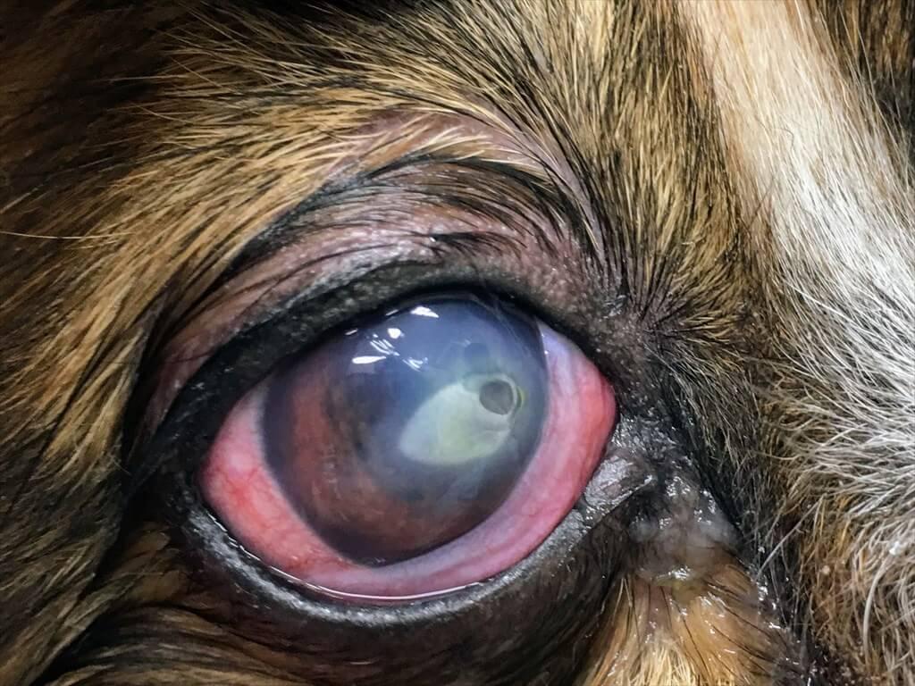 周り 白い の 点 目